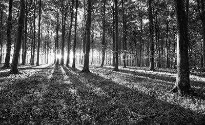 Bomen & Bladeren Fotobehang 2229P8
