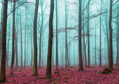 Bomen & Bladeren Fotobehang 2657P8