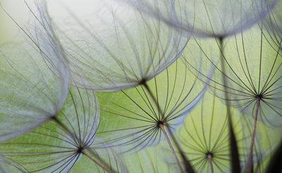 Bloemen & Planten Fotobehang 271P8