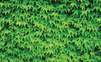 Bloemen & Planten Fotobehang 279P8