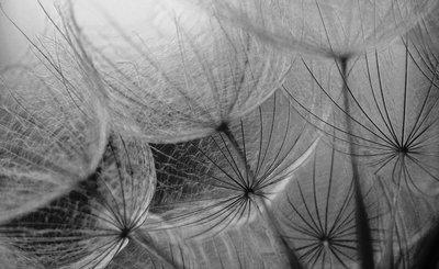 Bloemen & Planten Fotobehang 281P8