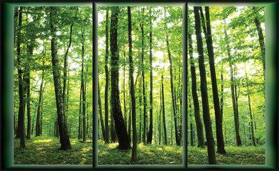 Bomen & Bladeren Fotobehang 495P8