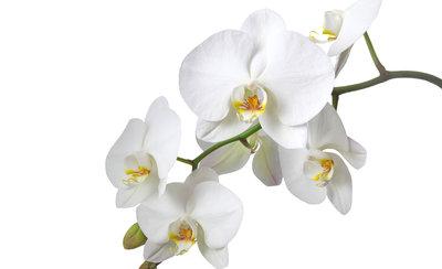 Bloemen & Planten Fotobehang 737P8