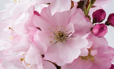 Bloemen & Planten Fotobehang 8-020P8
