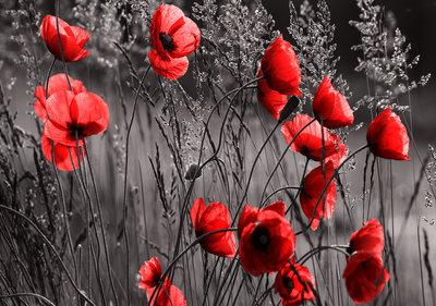 Bloemen Fotobehang 11763P8
