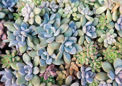 Planten Fotobehang 11757P8
