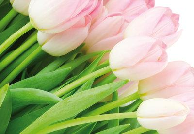 Bloemen & Planten Fotobehang 8-018P8