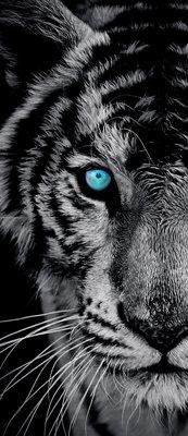 Majestic Tiger Deurposter Fotobehang 153VET