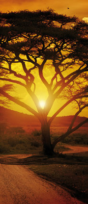 Africa Deurposter Fotobehang 055VET