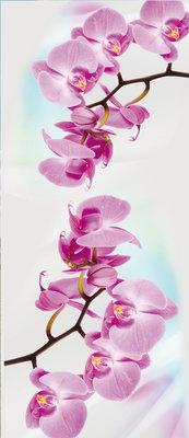 Orchid Flower Floral Deurposter Fotobehang 116VET