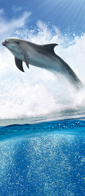 Dolphins Jumping on Waves Deurposter Fotobehang 188VET