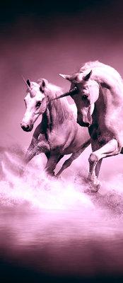 Horses girls Bedrooms Deurposter Fotobehang 429VET