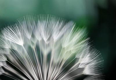 Bloemen & Planten Fotobehang 131P8