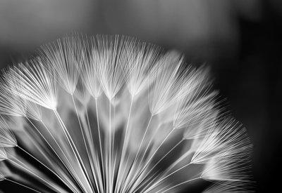 Bloemen & Planten Fotobehang 292P8