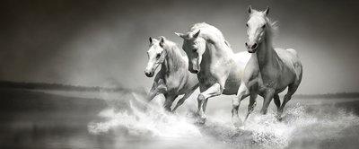 Horses girls Bedrooms Panorama Fotobehang 426VEP