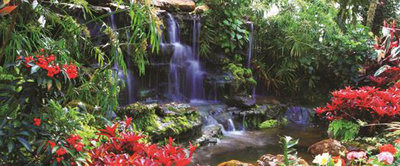 Waterfall in Colourful Jungle Panorama Fotobehang 166VEP