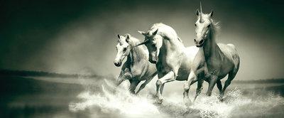 Unicorns Galloping on Water Panorama Fotobehang 430VEP