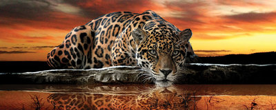 Jaguar Against the Setting Sun Panorama Fotobehang 126VEP