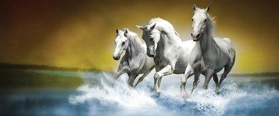 White Horses Galloping on Water Panorama Fotobehang 425VEP