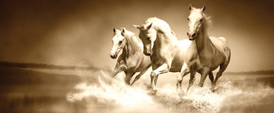 White Horses Galloping on Water Panorama Fotobehang 427VEP