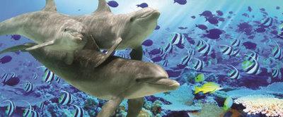 Dolphin Panorama Fotobehang 072VEP