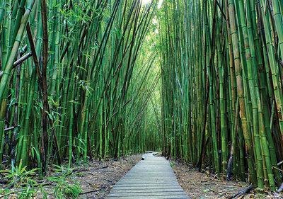 Bamboe Fotobehang 12632P8