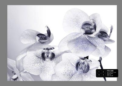 Dutch Wallcoverings AG Design Orchids (4 Delen) FTS1306