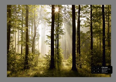 Dutch Wallcoverings AG Design Morning Forest (4 Delen) FTS0181
