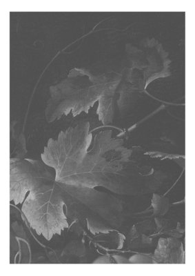 KEK Amsterdam Big Black & White Flowers III WP.341 (Met Gratis Lijm)