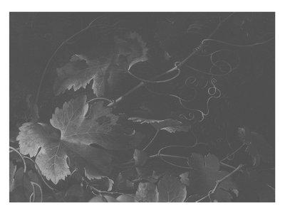 KEK Amsterdam Big Black & White Flowers III WP.347 (Met Gratis Lijm)