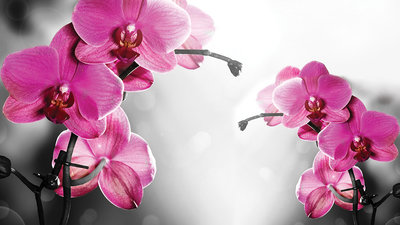 Bloemen & Planten Fotobehang 1034P8