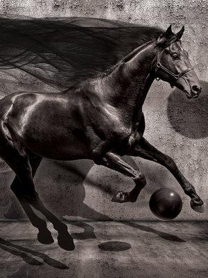 Black Horse Fotobehang 20303VEA