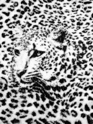 Black and White Cheetah Fotobehang 20306VEA