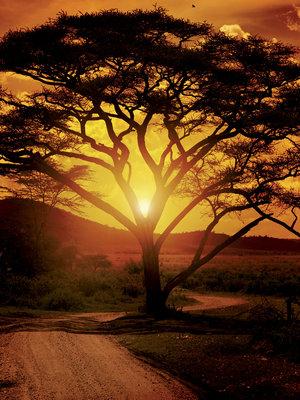 Africa Fotobehang 20316VEA