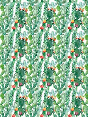 Cactus Fotobehang 11082VEA