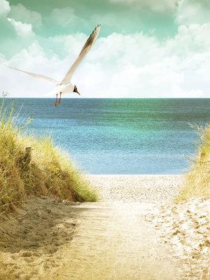 Beach Fotobehang 11595VEA
