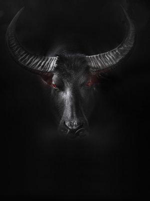 Bull Fotobehang 11897VEA