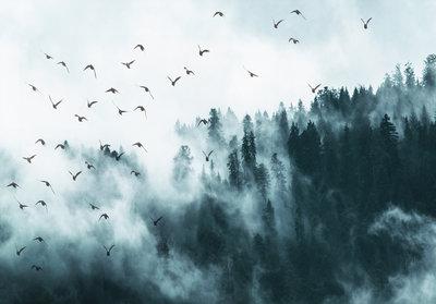 Vogels Mistig Bos Fotobehang 12394P8