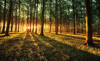 Bomen & Bladeren Fotobehang 2226P8