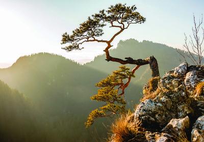 Bos bomen bergen fotobehang 10511p8 for Fotobehang goedkoop