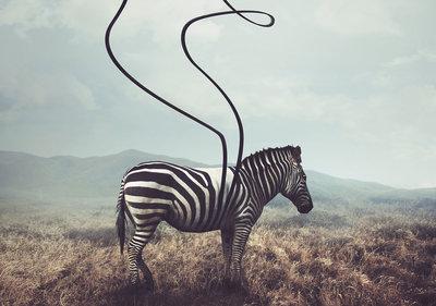 Zebra Fotobehang 11754P8