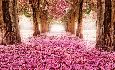 Bomen & Bladeren Fotobehang 851P8