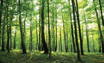 Bomen & Bladeren Fotobehang 186P8